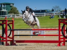 grey show jumping