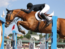 chestnut show jumping